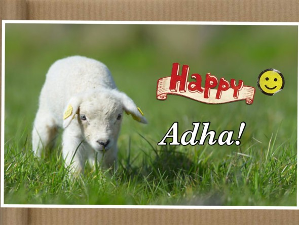 Thoughts about Adha